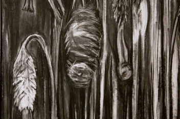 Study for Buds - detail 1 (charcoal)